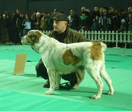 Пастушьи собаки Грузии - Страница 3 02