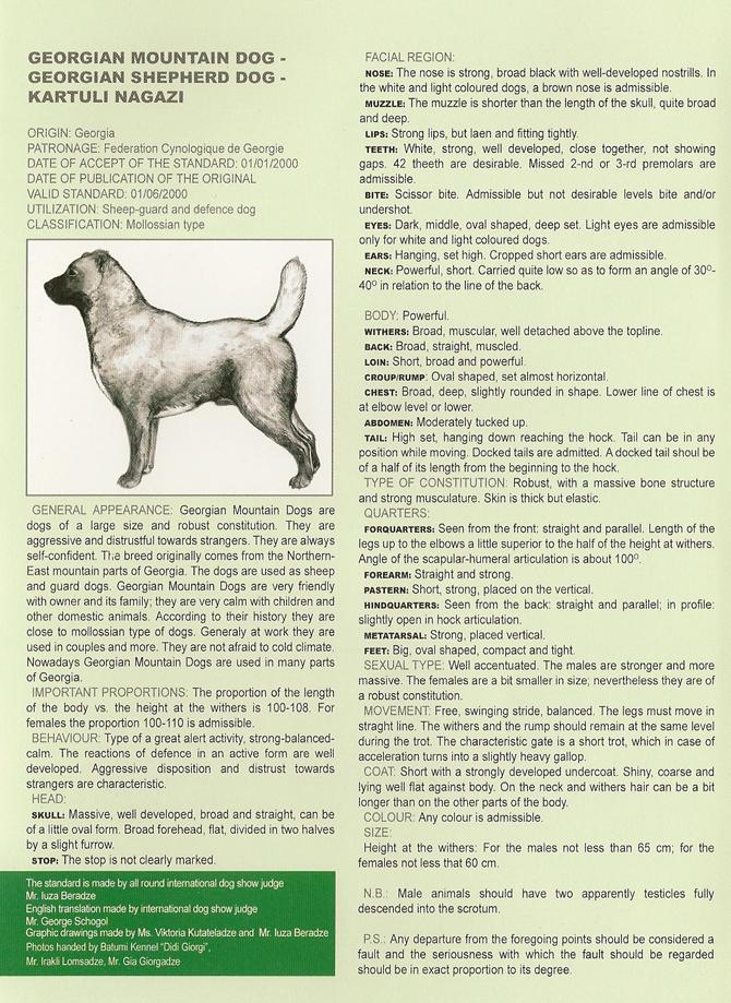 Грузинская горная, или грузинская пастушья собака, или грузинская овчарка Header_eng2